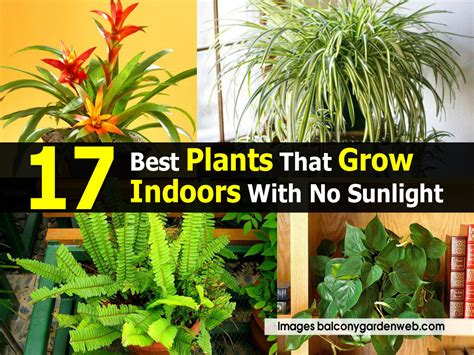 Best Plants For No Sunlight | 17 best plants that grow indoors with no sunlight