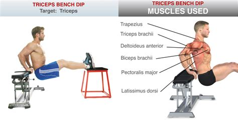 bench dips muscles worked uncategorized how to prevent back pain
