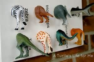 animal specimen art a turtle s life for me