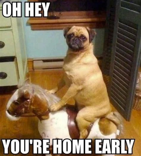 Silly Dog Meme - funny dog memes the ultimate collection dog training