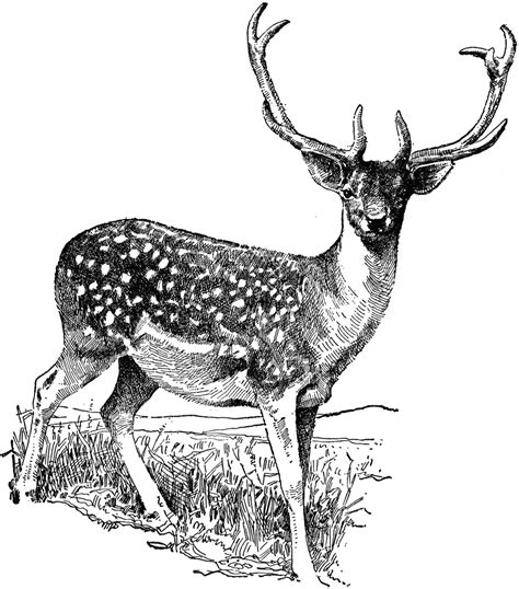 free clipart free deer clip pictures clipartix