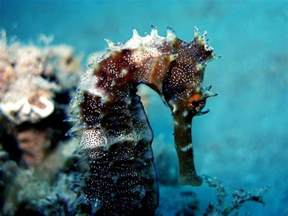 what color are seahorses 60 spectacular seahorses and seadragons pics