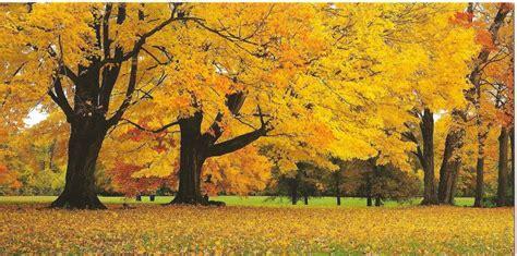 fiori d autunno i fiori consigliati insieme alle frasi per l autunno