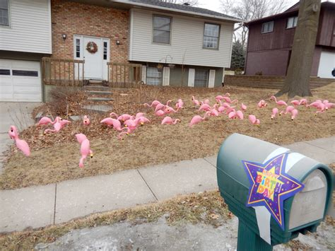 pink flamingos in the front yard pink flamingos in the front yard for my sister s birthday