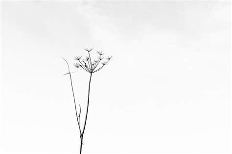 minimalistische bilder minimalismus fehlbelichtet de fotografien stefan wensing