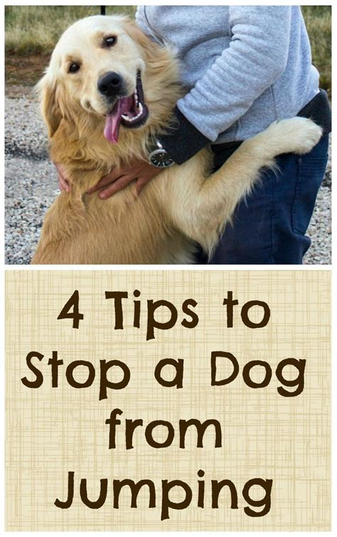 Stop Puppy From Jumping On by 4 Tips To Stop A From Jumping Tips Dogs And The O Jays