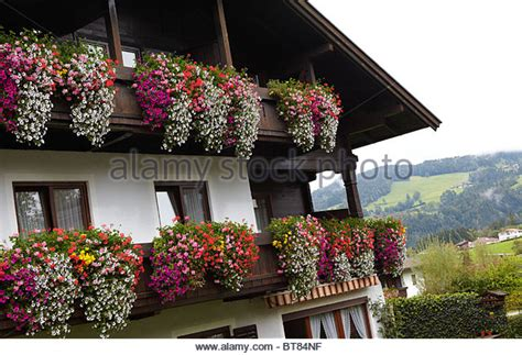 traditional alpine house stock photo image of blooming traditional wooden alpine house stock photos traditional