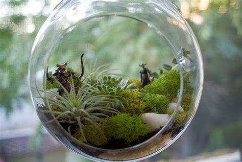terrariums brady kennedy