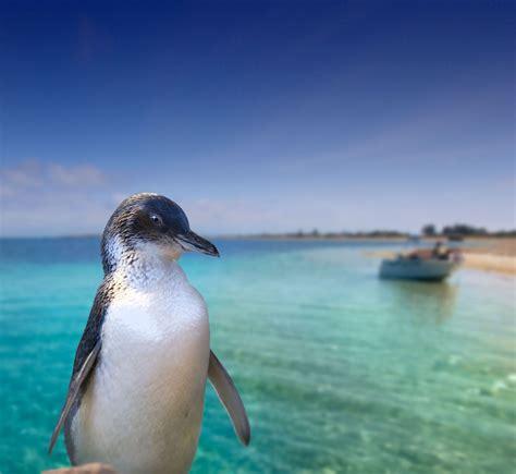 glass bottom boat tour rockingham rockingham wild encounters penguin island ferry and