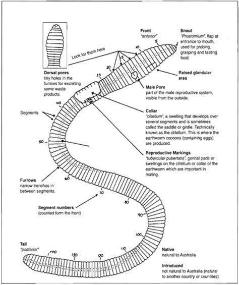 the earthworm diagram worm wise ii vro agriculture
