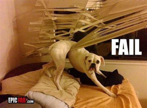 puppy fails fail daily picks and flicks