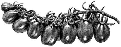Tomaten Resistente Sorten 1600 by Mein Kleiner Stadtgarten The Seedling Update