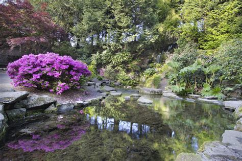 wann pflanzt rhododendron rhododendron pflanzzeit 187 wann ist die beste zeit zum