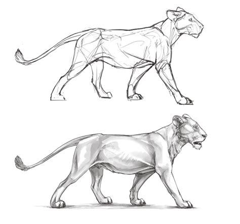 A682 White http orig07 deviantart net a682 f 2013 120 e e lioness