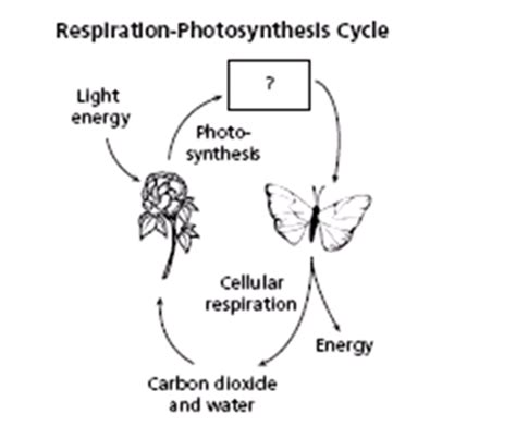 cell energy photosynthesis and respiration section 6 1 photosynthesis and cellular respiration quiz 4