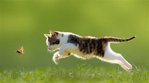 For Cats by 187 Fabulous Jumping Cats Will Make You Go Meow