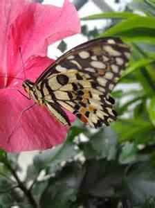 jardins des papillon hunawihr alsace foto