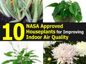best houseplants for air quality top 10 nasa approved houseplants for improving indoor air quality