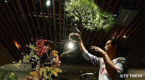 bonsai masterclass all you need do you know this japanese man masashi hirao who is admired all over the world japan info