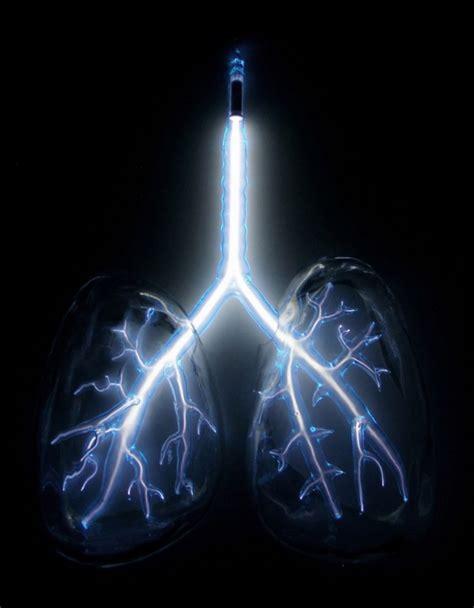 jones lights anatomical neon blown glass human organs containing neon