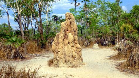darwin waterfalls litchfield termites