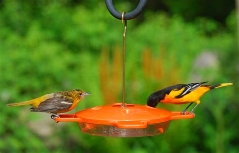 wild birds unlimited what birds drink nectar