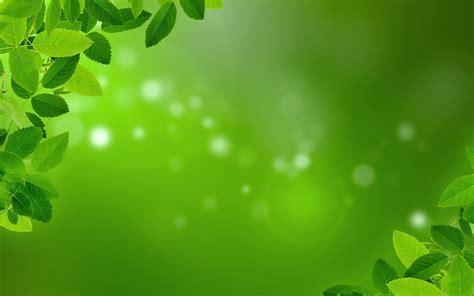 plant background mint foliage background 183 free image on pixabay