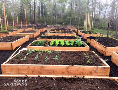 How To Prepare A Garden Bed Update Niki S New Raised Beds