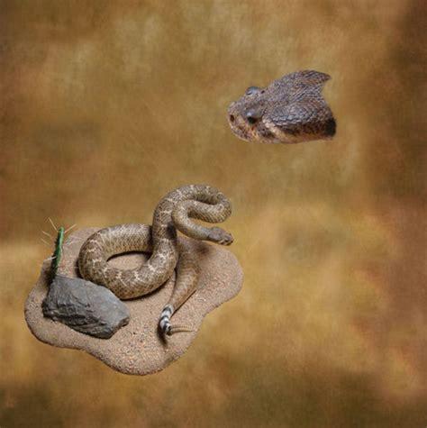 wdb-2012 Western Diamondback Rattlesnake Head