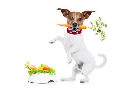 additivi chimici negli alimenti i conservanti sintetici e naturali usati negli alimenti di
