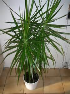 identification d une plante verte