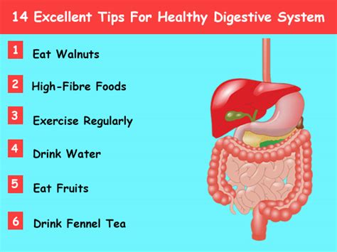7 Tips To A Healthy Digestive System 14 excellent tips for healthy digestive system boldsky