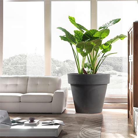 piante da vaso per esterni vaso esterno grandi dimensioni standard one vendita