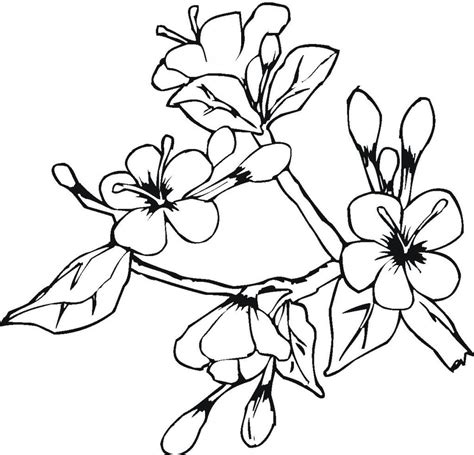 coloring pages large flowers big flower coloring pages free printable