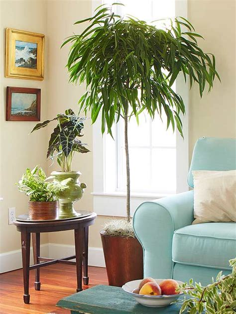 best plants for dark rooms indoor trees that spruce up any space