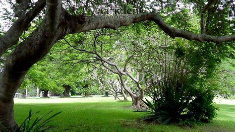garden images photo gallery markden gardens showcase