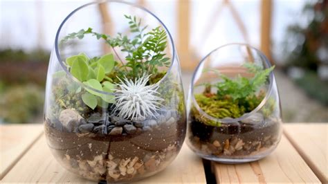 how to make a terrarium garden answer youtube