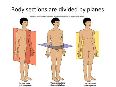 sections of body 1 the human body an orientation part b anatomical
