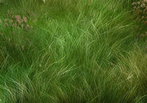 tutorial photoshop grass tutorial digital painting how to paint grass with adobe