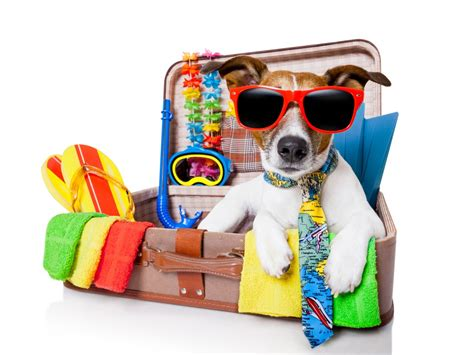 Vacation Pet Pet Pet Product by Traveling With Your Pets Amac The Association Of
