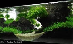 fish tank aquascaping 1000 images about aquascaping fish tank on