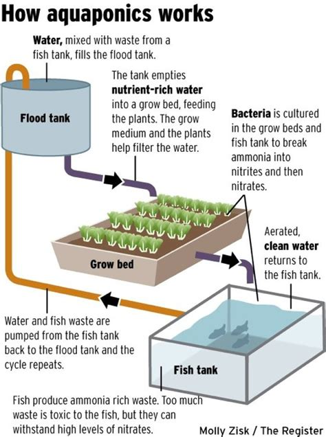 backyard aquaponics plans diy aquaponics plans what is aquaponic system