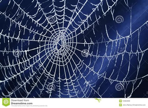 free images web frozen spider web royalty free stock images image 12084009