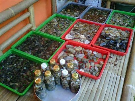 Black Opal Belum Jarong kalimaya batavia kalimaya batavia 39