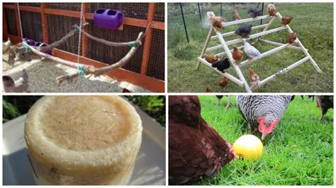 Backyard Chickens Toys How To Keep Your Chickens Entertained 3 Diy Toys Part