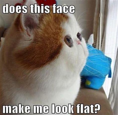 Random Cat Meme - random funny images dumpaday 26 dump a day