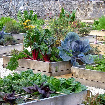 terrace vegetable garden complete tutorial