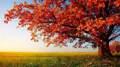 Desktop Nature Wallpaper Hd Widescreen Free Download