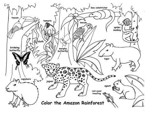 Rainforest Animals Coloring Pages by Rainforest Animals Coloring Pages Www Imgkid