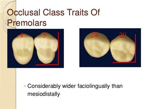 Maxillary Premolar Maxillary Right Second Premolar Related Keywords